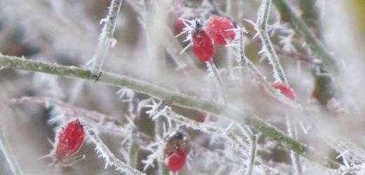 Vremea se incalzeste in perioada 6-19 ianuarie