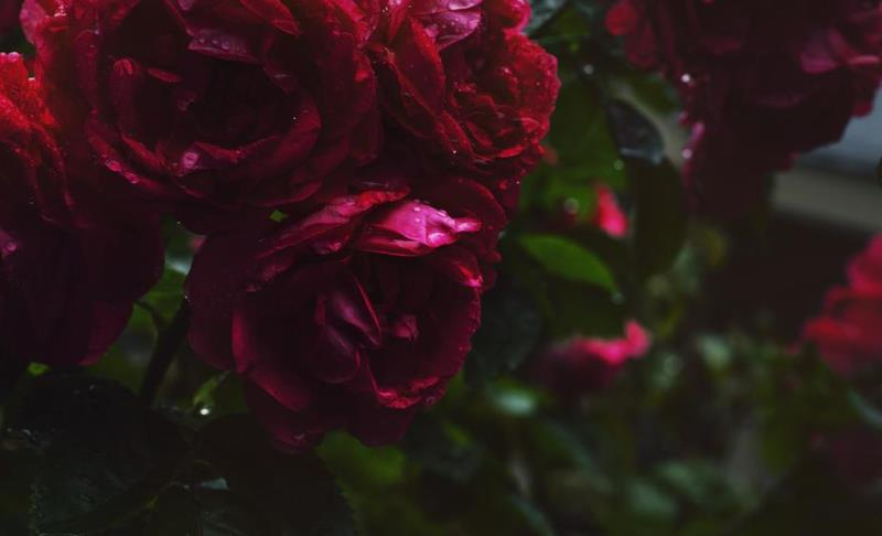 Florarie online Bucuresti cu buchete deosebite